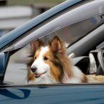 ペットを乗せていた車はなぜ査定額が低くなってしまうのか!